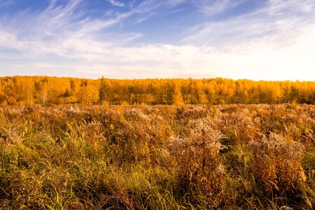 Scene of sunset on a field with grass, trees and dramatic cloudy sky background in golden autumn evening. Landscape.