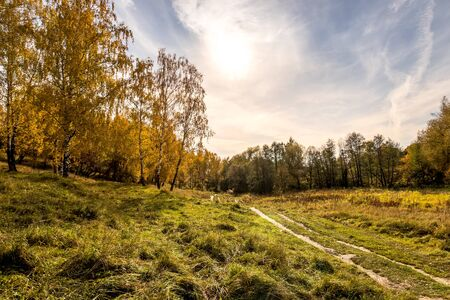 A path among birches with yellow leaves during the fall season. A clear sunny evening in golden autumn. Landscape.