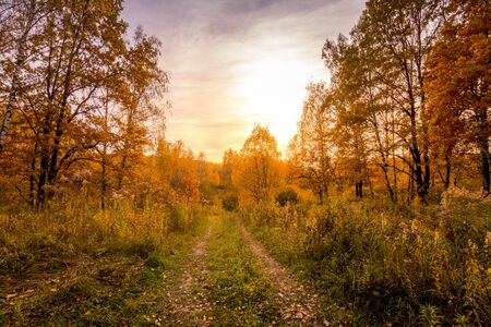 Sunset on a field with grass, footpath, trees and dramatic cloudy sky background in golden autumn evening. Landscape. Zdjęcie Seryjne - 131495936