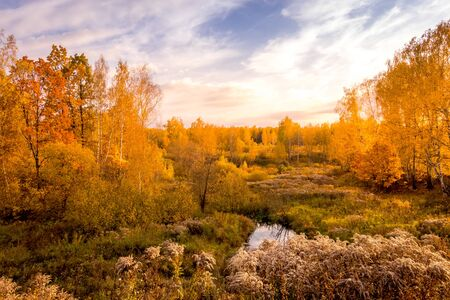 Sunset on a field with grass, birches, other trees and dramatic cloudy sky background in golden autumn evening. Landscape. Leaf fall.
