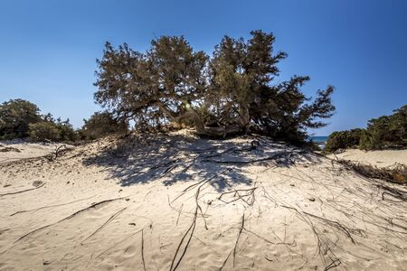 Chrissy island scenery on a sunny summer day with dry trees, white sand and blue clear sky. Crete, Greece. The southernmost island of Europe with a dry African climate. Reklamní fotografie