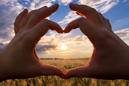 Hands in the shape of heart against the sunset over the field with young rye or wheat in the summer with a cloudy sky background. Landscape.