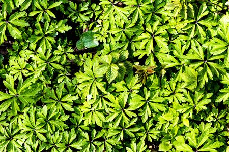 Texture of young green plant sprouts. Early spring. Abstract backdrop for design.
