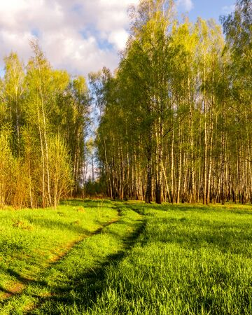 Sunset or dawn in a spring birch forest with bright young foliage glowing in the rays of the sun, shadows from trees and a path.