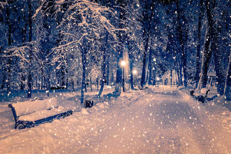 Winter night park with lanterns, pavement and trees covered with snow in heavy snowfall. Reklamní fotografie