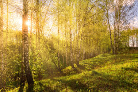 1,614 Sunlight Breaking Through Stock Photos and Images - 123RF