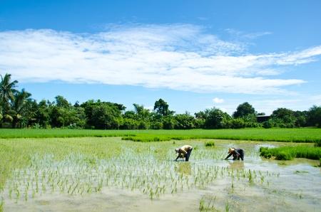 Farmers are farming. Stock Photo