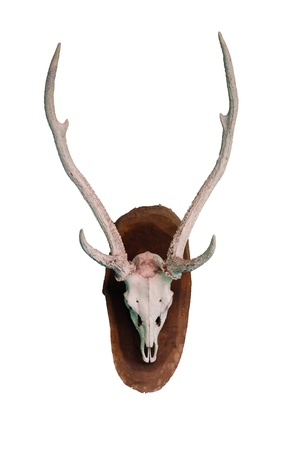 elk point: Antler on a white background. Stock Photo