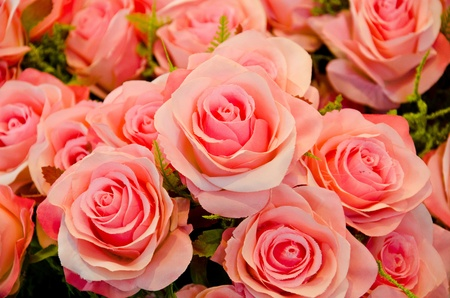 Pink roses mean love is beginning to grow on mind. photo