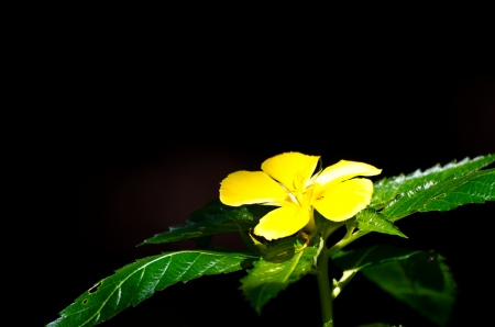 Yellow Flower on a black background  Stock Photo - 14601677