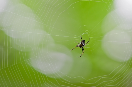 Spider webs in the tropical rain forest.