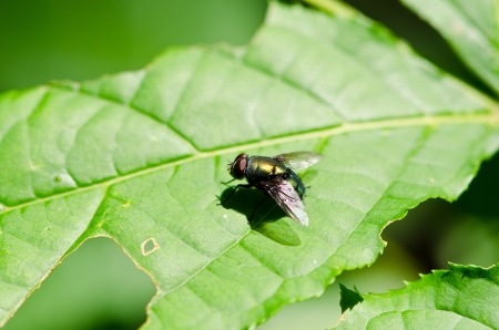 fly on green leaf  In tropical forests  photo