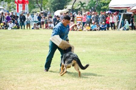 THAILAND- JANUARY 12: Show Dogs of War, Thailand's Air Force. Don Muang Airshow, January 12, 2013, Don Muang Airport, Bangkok, Thailand.  Stock Photo - 17765320