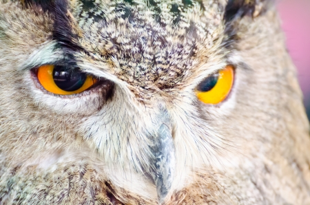 Eyes of the owl  photo