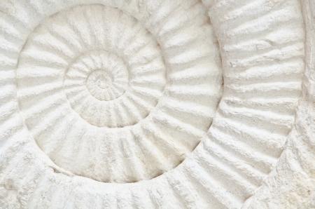 Closeup of an ammonite prehistoric fossil