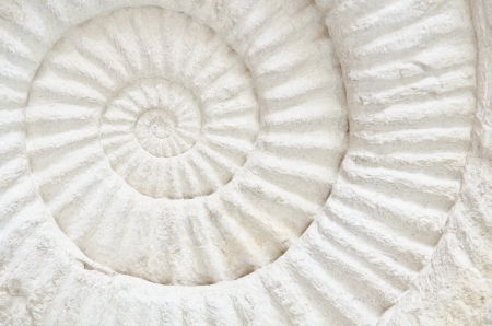 Closeup of an ammonite prehistoric fossil