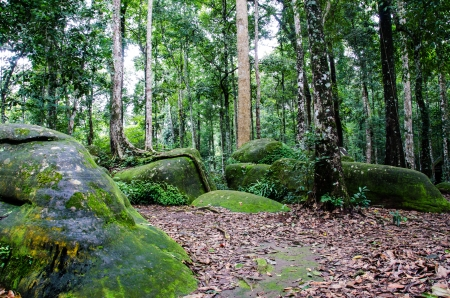 Trails in rain forest, Phu Hin Rong Kla national park, Thailand
