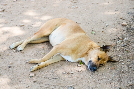 Sleeping dog on ground photo