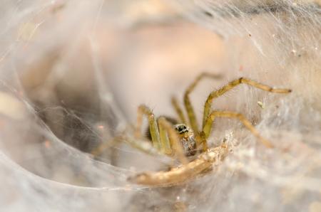 arachnoid: Ragno sul web nella foresta pluviale tropicale