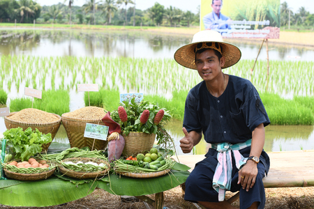 sufficient: SINGBURI - THAILAND 18 : Farmers planting rice by demonstrating sufficient economy like Kings and Thailand show their loyalty to The monarchy at Bangrachan on October 18, 2016 in Singburi, Thailand. Editorial