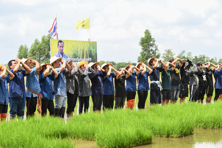 SINGBURI - THAILAND 18 : Farmers planting rice by demonstrating sufficient economy like Kings and Thailand show their loyalty to The monarchy at Bangrachan on October 18, 2016 in Singburi, Thailand. 에디토리얼
