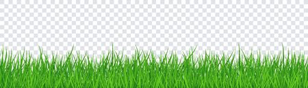 Green Grass Isolated Transparent background. Vector Illustration