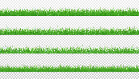 Green Grass Isolated Transparent