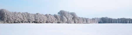 Winter beautiful landscape with trees covered with hoarfrost Archivio Fotografico