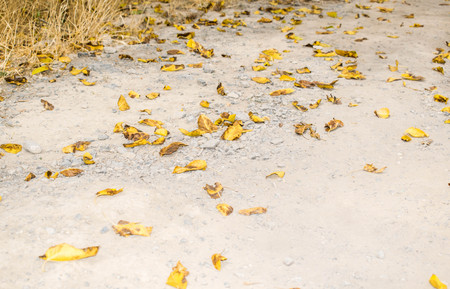 autumn nature background Imagens