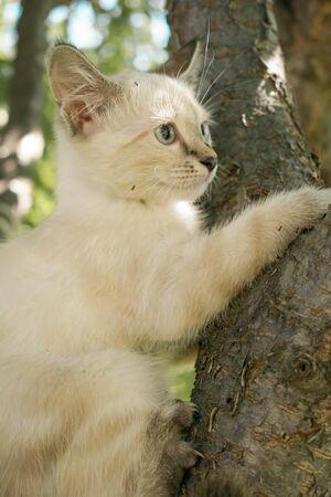 Kitten of nature for design Stock Photo - 132213755