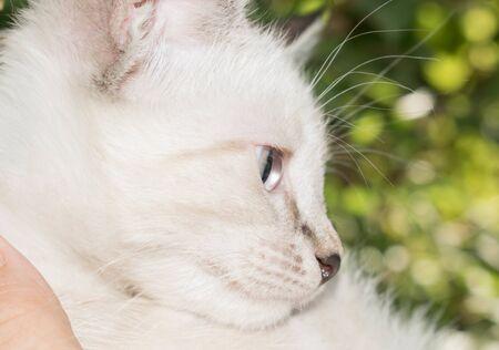 Kitten of nature for design