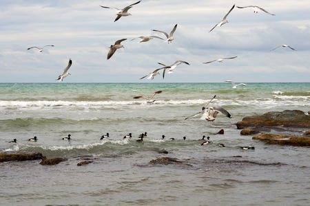 Birds of the sea. Seabirds are birds that are adapted to life within the marine environment. Imagens
