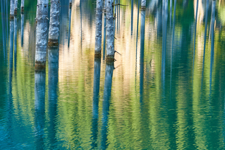 Reflection of trees on a green background of a lake. Lake Kaindy, meaning the birch tree lake -is a 400-meter-long lake in Kazakhstan that reaches depths of 30 meters in some areas. It is located 129 kilometers east-southeast of the city of Almaty and is 2,000 meters above sea level. The lake was created as the result of an enormous limestone landslide, triggered by the 1911 Kebin earthquake.