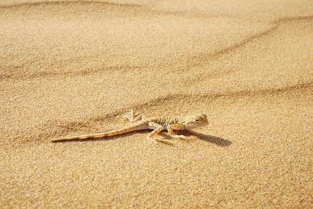 Tengger Desert 版權商用圖片