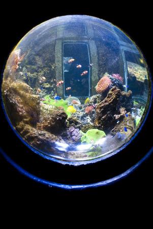 sphere aquarium photo