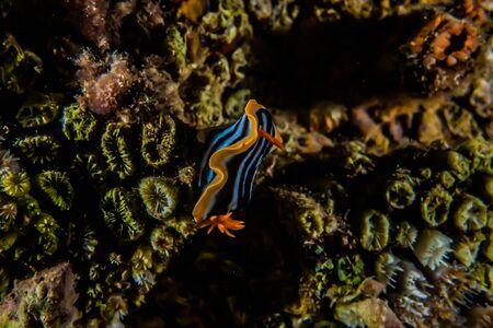 Sea slug in the Red Sea Colorful and beautiful, Eilat Israel 写真素材