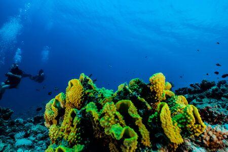 Arrecifes de coral y plantas acuáticas en el Mar Rojo, Eilat Israel