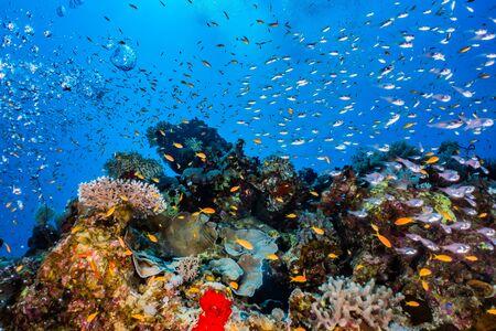 Barriere coralline e piante acquatiche nel Mar Rosso, Eilat Israel