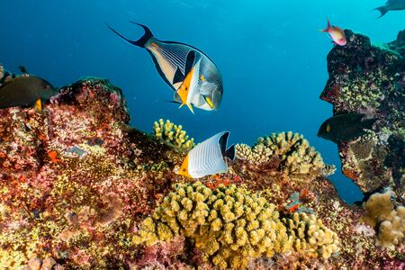 Coral reefs and water plants in the Red Sea, Eilat Israel Foto de archivo