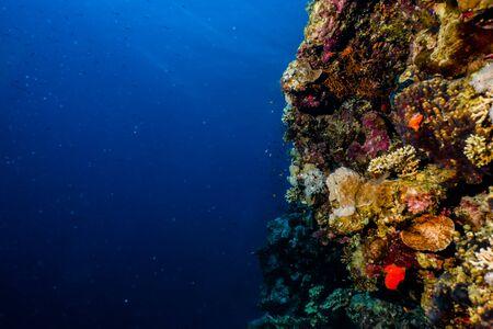 Korallenriffe und Wasserpflanzen im Roten Meer, Eilat Israel