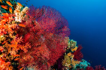 Coral reefs and water plants in the Red Sea, Eilat Israel Stockfoto