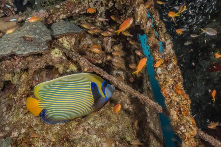 Fish swim in the Red Sea, colorful fish, Eilat Israel
