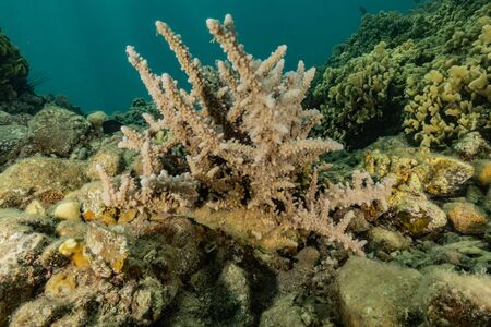 Coral reef and water plants in the Red Sea, Eilat Israel