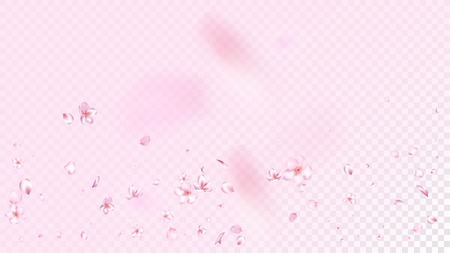 Nice Sakura Blossom Isolated Vector. Summer Falling 3d Petals Wedding Frame. Japanese Oriental Flowers Wallpaper. Valentine, Mother's Day Feminine Nice Sakura Blossom Isolated on Rose