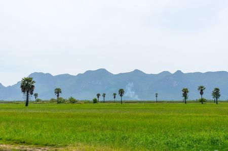 khan: Rice fields at  National Park Prachuap Khiri Khan Province