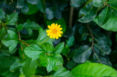 yellow star: Little yellow star