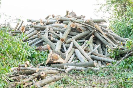 deforestacion: la deforestaci�n, la Madera