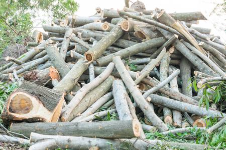 deforestacion: la deforestación, la Madera