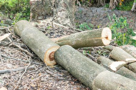 deforestation: deforestation, Timber