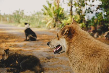 looking ahead: Thai Dog vacant  looking ahead and near with a friends. Stock Photo
